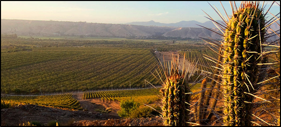 Chileens wijnwalhalla  – Deel I – Noordelijk Chili