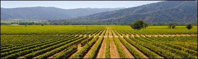 Chileens wijnwalhalla  – Deel II – Centraal Chili