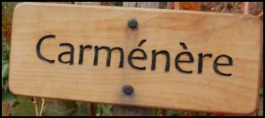 De carmenère druif komt weer thuis